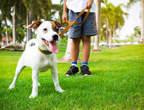 Highlighting Dog-Friendly Parks In Our County
